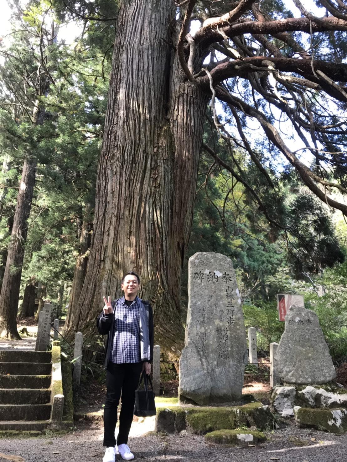 樹齢約1000年広島県下第2位の大きさの老杉