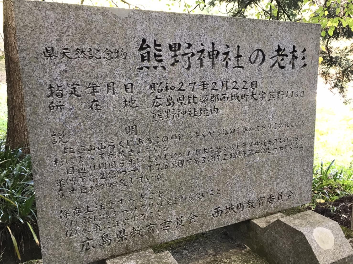 県天然記念物 熊野神社の老杉